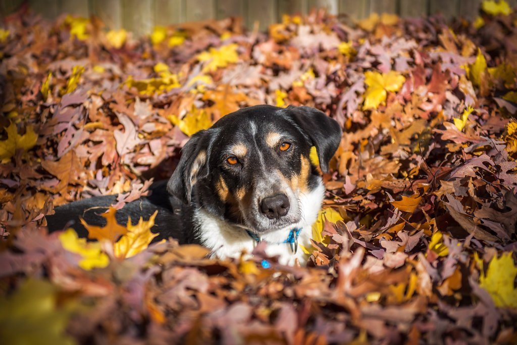 Oscar in the Leaves